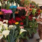 111713 MS Elias Jaua Feria Agroturistica El Jarillo 42